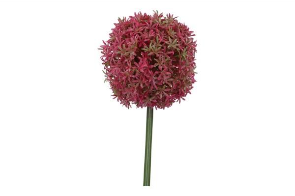 Allium, Länge 71cm, 1 Stück