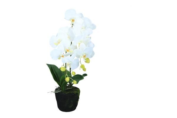 Orchidee mit Erde, Höhe 65cm, 1 Stück