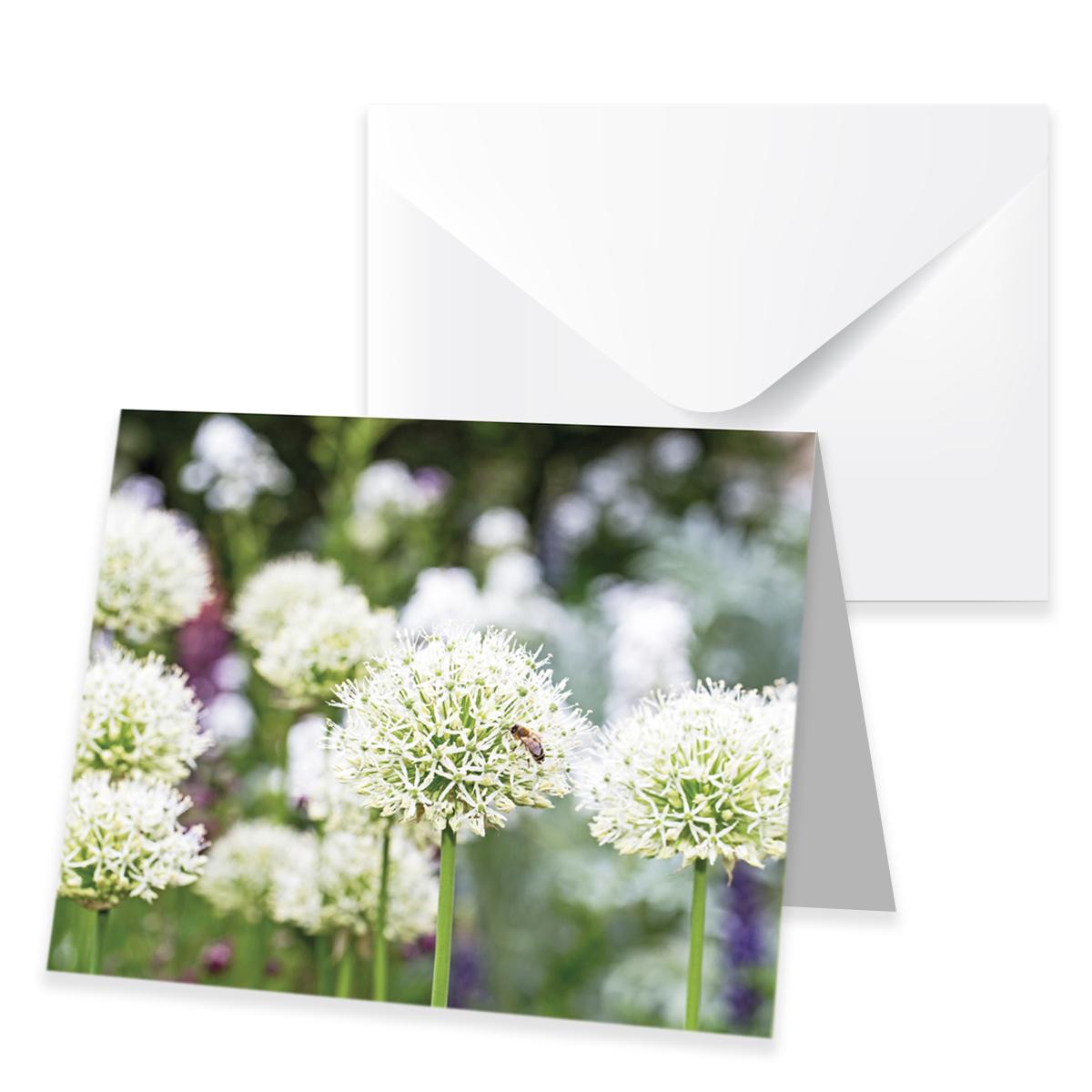Allium 7,5x9cm, mit Umschlag, Ve. 12 Stk