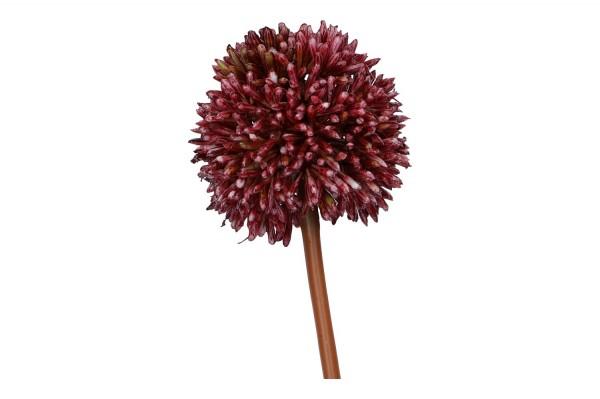 Allium Länge 50cm, 1 Stück