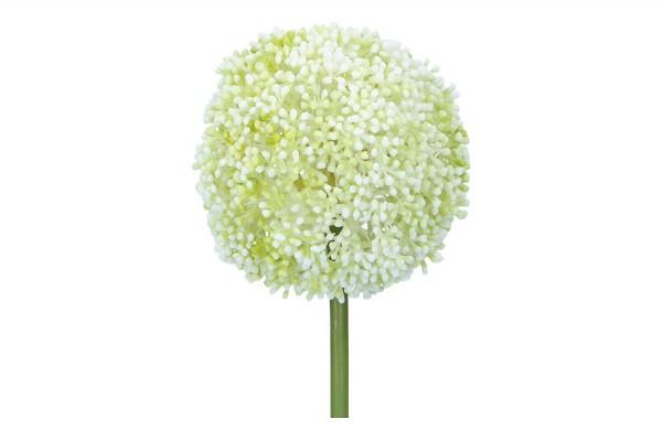 Alliumdolde Länge 71cm, 1 Stück