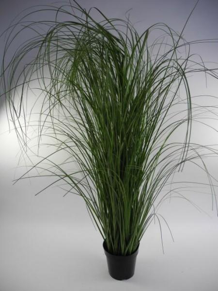 Gras im Topf, Höhe 183cm, 1 Stück