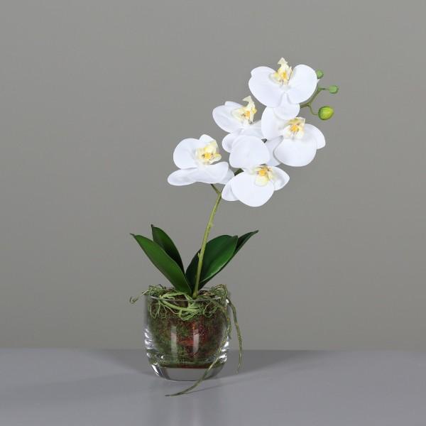 Orchidee-Phalaenopsis 42cm, Ve. 1
