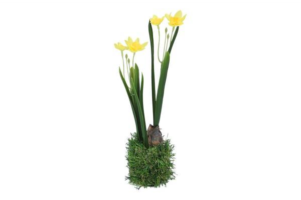 Narzisse im Gras Höhe 24cm, 1 Stück