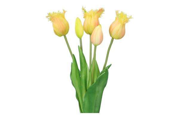 Tulpenbund Thrum 45cm, 1 Bund = 5 Tulpen