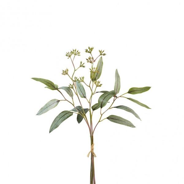 Eucalypthusblätterbündel mit Früchten (#181309000)
