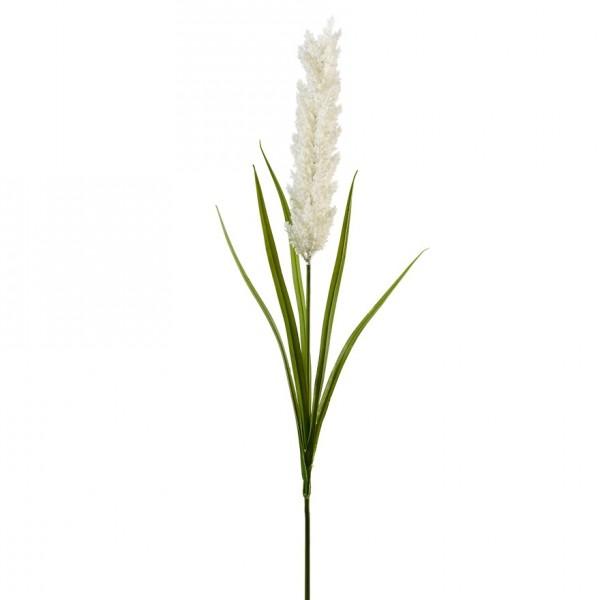 Pampasgras Zweig mit Blätter L118cm, Ve1 (#191198044)