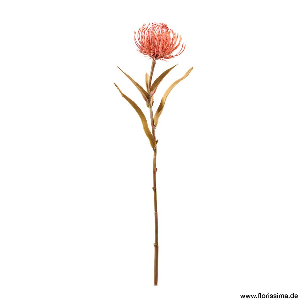 Protea mit Blätter L5cm, Ve. 3 Stk (#191320060)