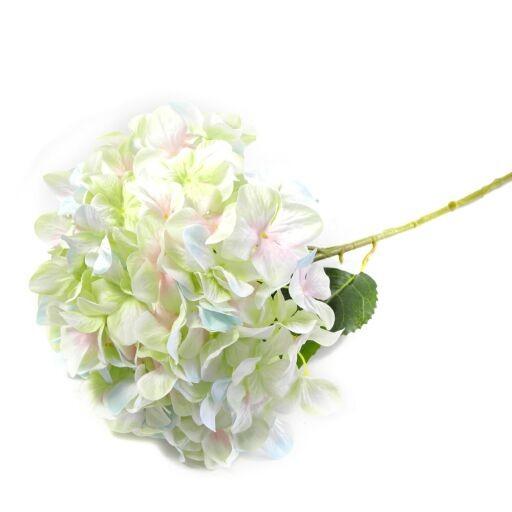 Jumbo-Hortensie mit 3 Blätter, 1 Stück
