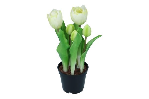 5 Tulpe im Topf, H 24 cm, 1 Stück (#195014010)
