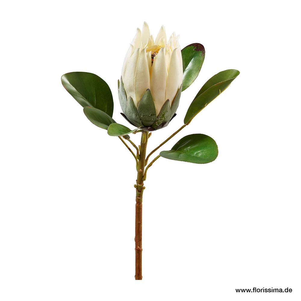 Protea mit Blätter L56cm, Ve. 1 Stk (#181107010)