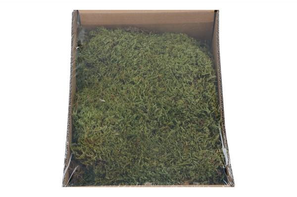 Moos, 1 Box = 150gr