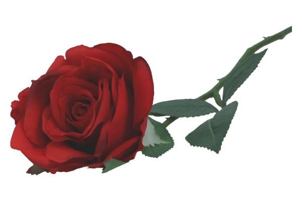 Rose 51cm, 1 Stück