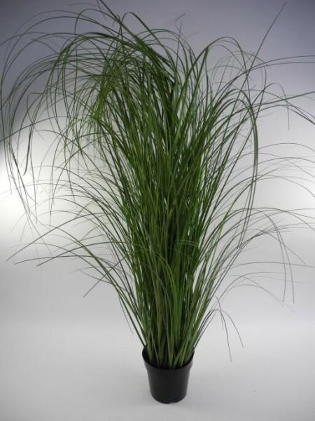 Gras im Topf, Höhe 152cm, 1 Stück