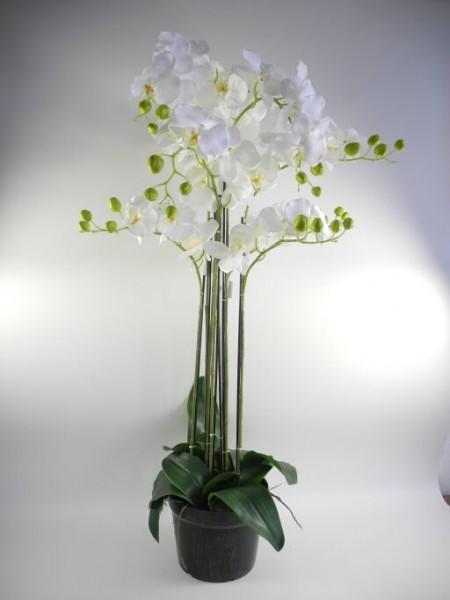 Orchidee im Topf, 9 Triebe, Höhe 107cm