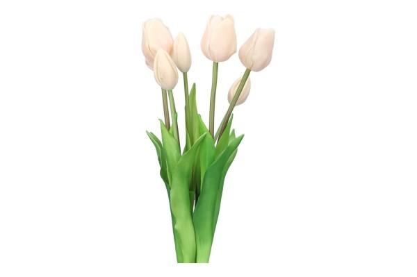 Tulpenbund 47cm, 1 Bund = 7 Tulpen