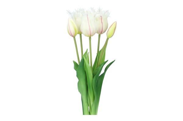 Tulpenbund Truhm 45cm, 1 Bund = 5 Tulpen