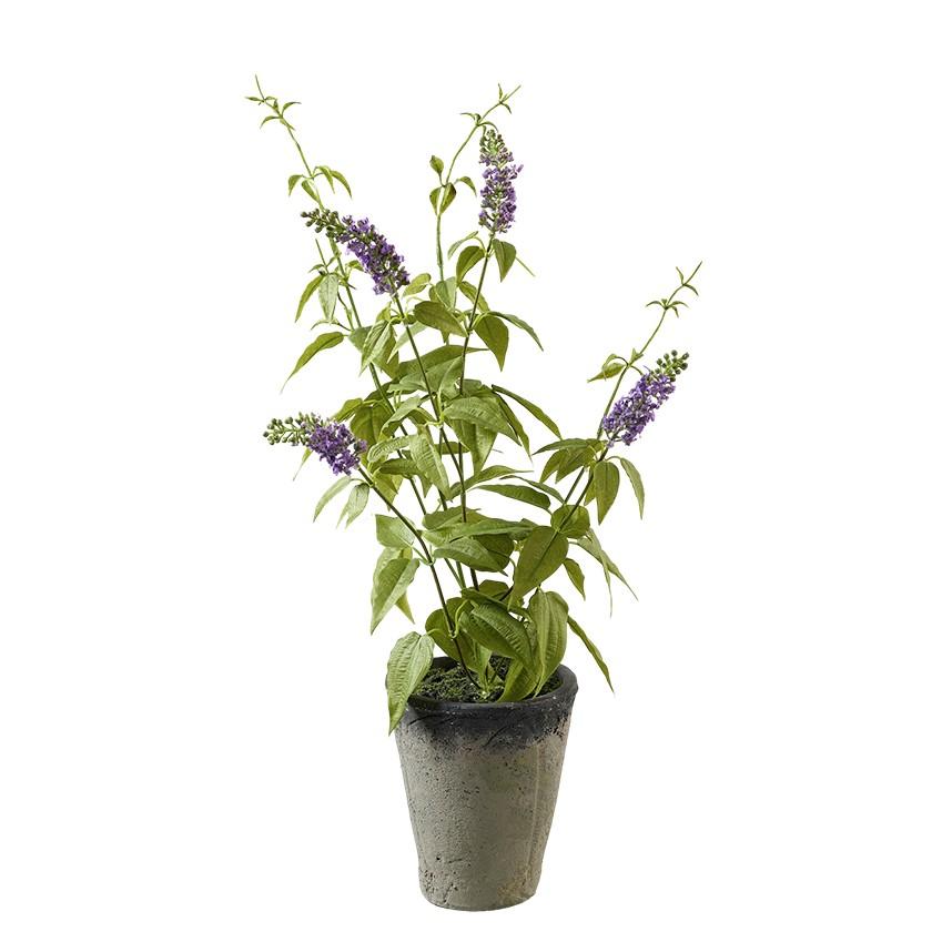 Lavendel im Topf H56cm, Ve. 1 (#191215000)