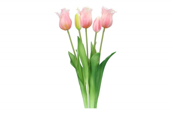 Tulpenbund 45cm, 1 Bund = 5 Tulpen