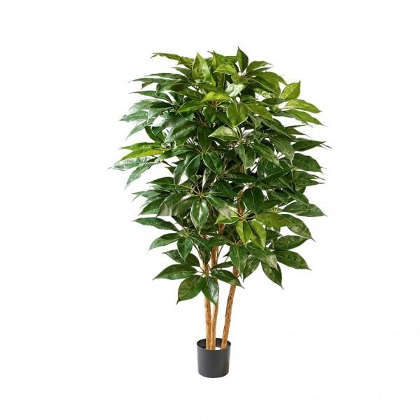Schefflera Baum mit 350 Blätter, H 120cm (#191128019)