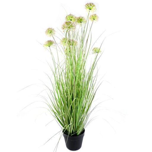 12 Allium mit Gras in Plastiktopf H117cm (#191032035)