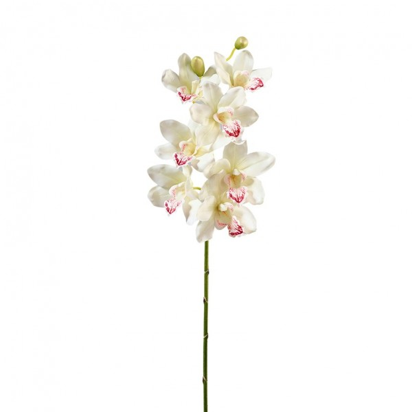 Orchidee Cymbidium L96cm, Ve. 1 (#191244044)