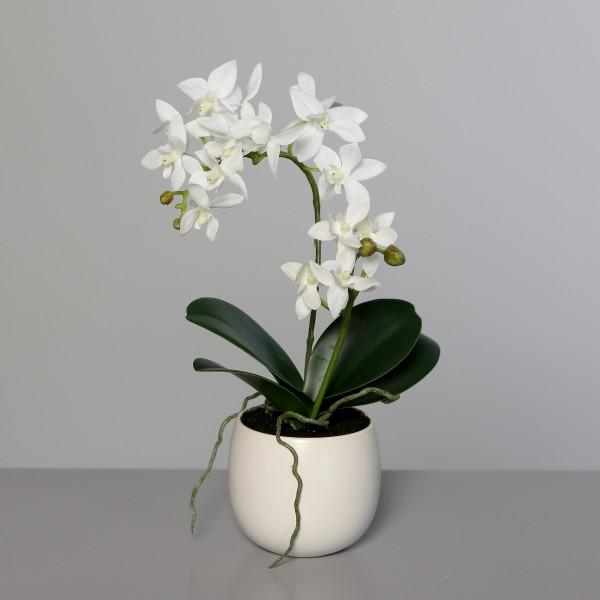 Orchidee im Keramiktopf 34cm, Ve. 1