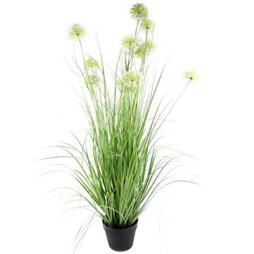 Allium x12 mit Gras im Platiktopf H117cm (#191032044)