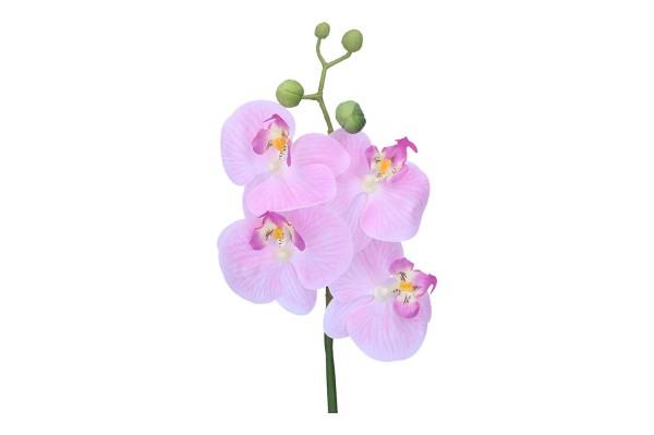 Orchidee Phalaenopsis, Länge 46cm