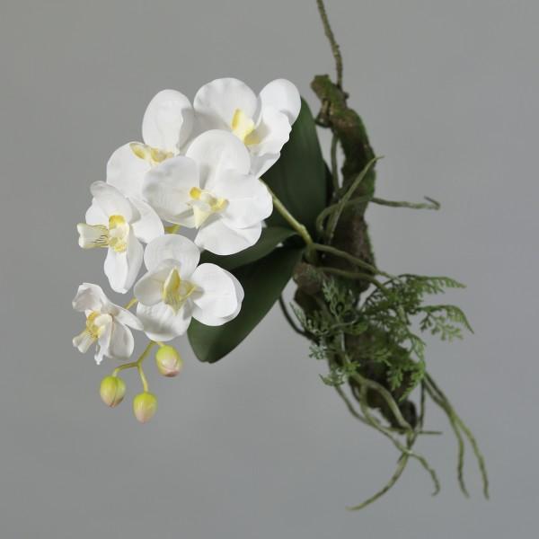 Orchidee 'Avatar' mit Ast zum hängen,