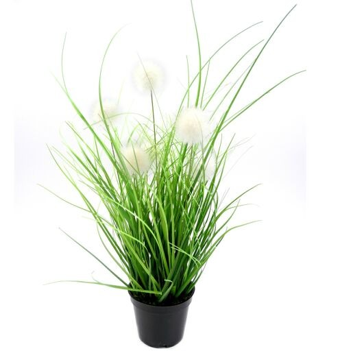 Allium x7 mit Gras im Plastiktopf, H40cm (#191028044)