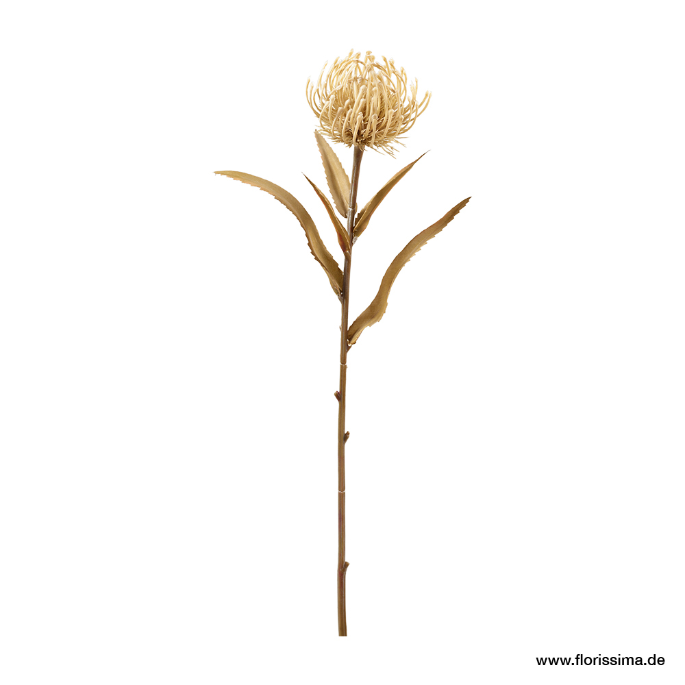Protea mit Blätter L51cm, Ve. 3 Stk. (#191320010)