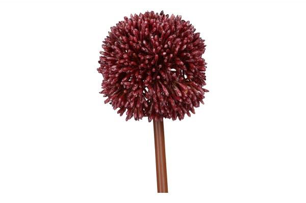 Allium, Länge 63m, 1 Stück