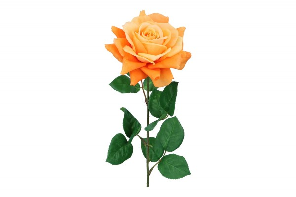 Rose, Länge 68cm