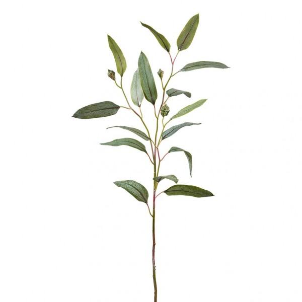 Eucalypthuszweig mit Früchten, L74cm (#181311000)