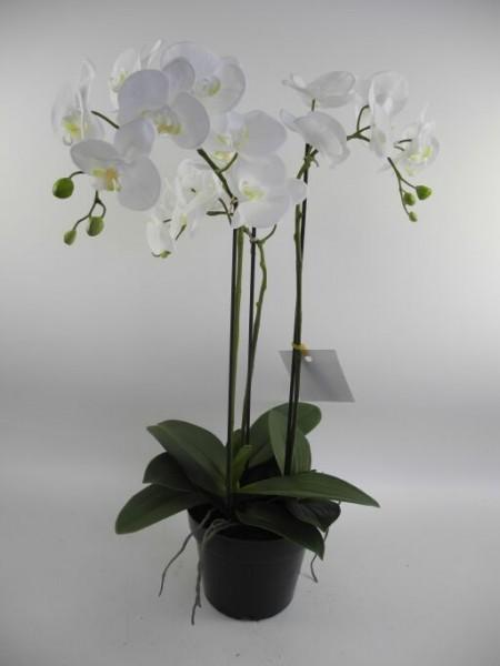 Orchidee im Plastiktopf, Höhe 66cm