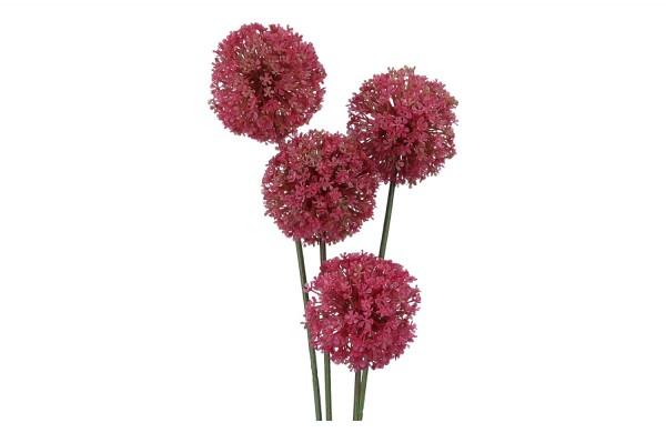 Allium, Länge 53cm, 4 Stück