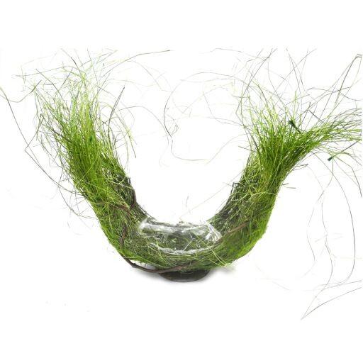 Schale mit Rebe und Gras 35x35cm (#220371000)