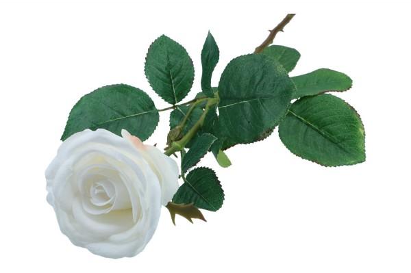 Rose, Stiellänge 95cm