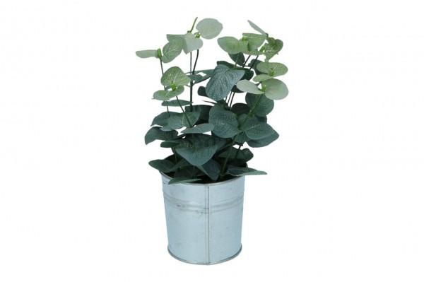 Eucalyptus im Zinktopf Höhe 25cm, grün