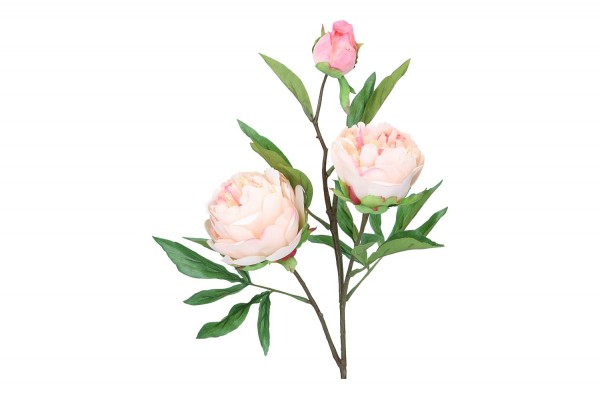 Pfingstrose mit 3 Blüten, Länge 74cm