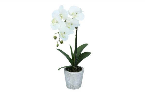Orchidee im Topf, Höhe 43cm, 1 Stück