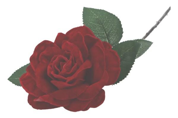 Velvet Rose R 44cm, 1 Stück
