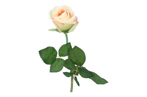 Bras. Rose, Länge 55cm, 1 Stück