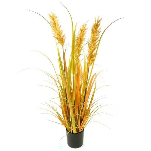 Weizengras im Topf, Höhe 94cm, 1 Stück