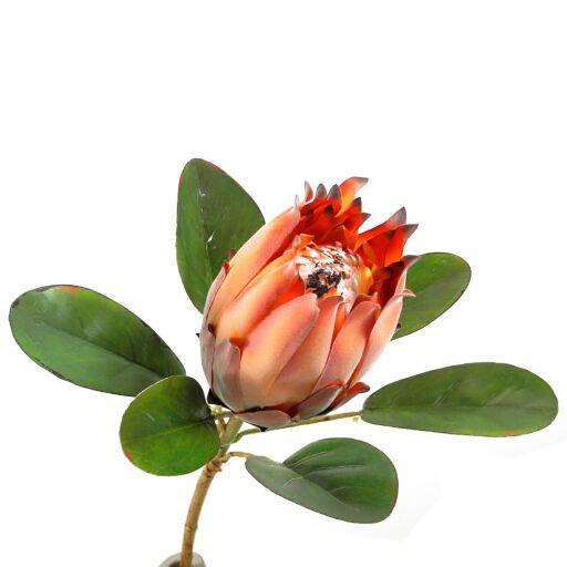 Protea mit Blätter L56cm, Ve. 1 Stk (#181107034)