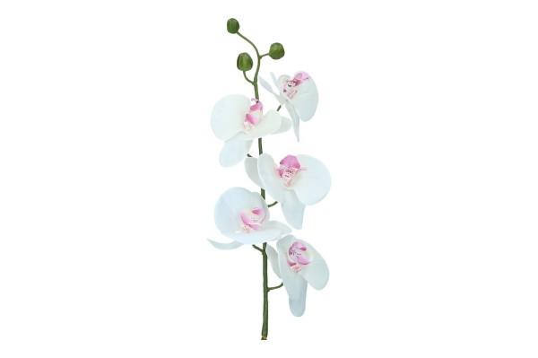 Orchidee mit 5 Blüten und 3 Knospen
