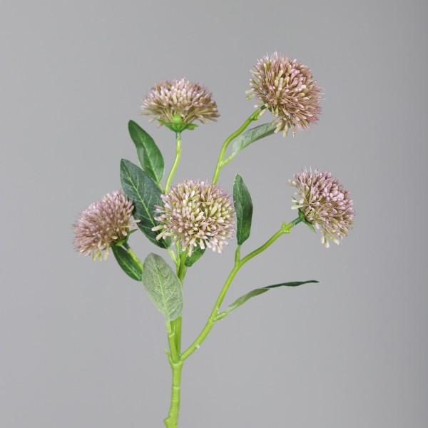 Allium mit 5 Blüten L56, purple, ve. 1
