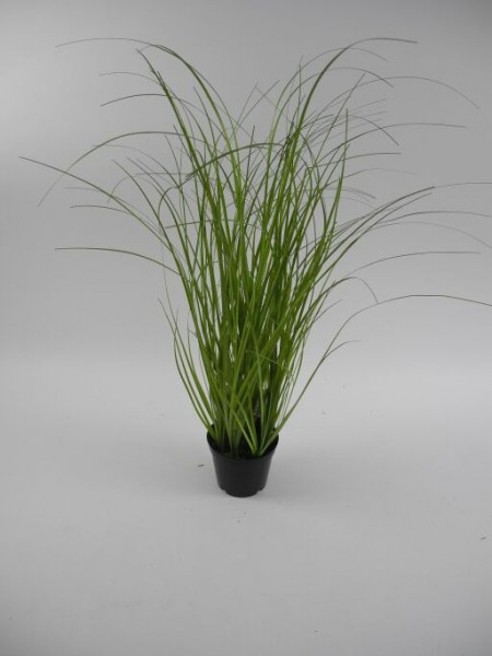 Gras im Topf, Höhe 61cm, 1 Stück