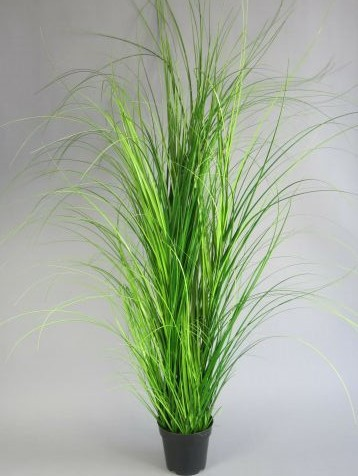Gras im Plastiktopf H 152cm, 1 Stück (#194153000)